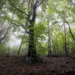 bosques frondosas
