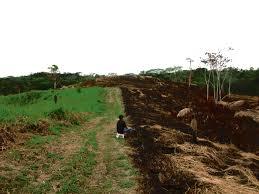 contraste de suelo recien deforestado