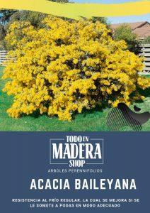 poster de la acacia baileyana