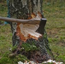deforestacion y tala de arboles