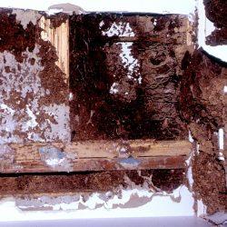 consecuencias del ataque de termitas