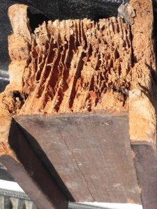 daño de termitas a una pieza de madera