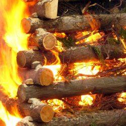propiedades de la madera